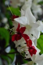 fiori a pannocchia