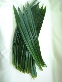 foglie con spine
