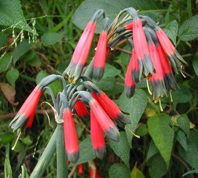 Piante da giardino specie immagini e nomi for Nomi piante da giardino