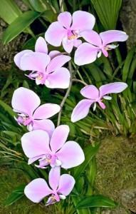 fiori a farfalla