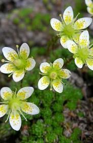 fiori piccoli