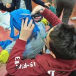 attivita bambini ortolandia