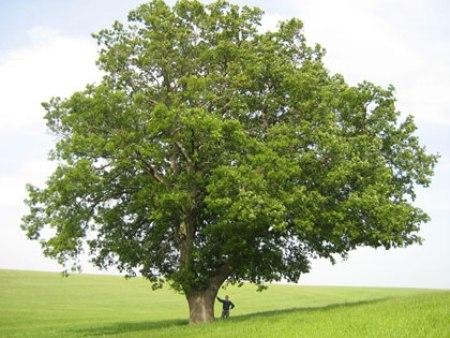 alberi tipi nomi e immagini