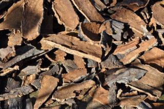 corteccia albero di sughero