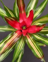 fiori ornamentali