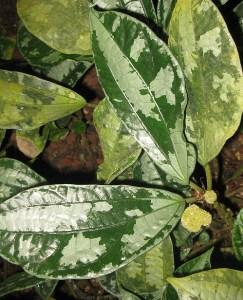 foglie decorative