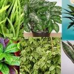 Le piante antismog