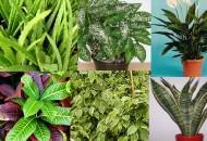 piante antinquinamento