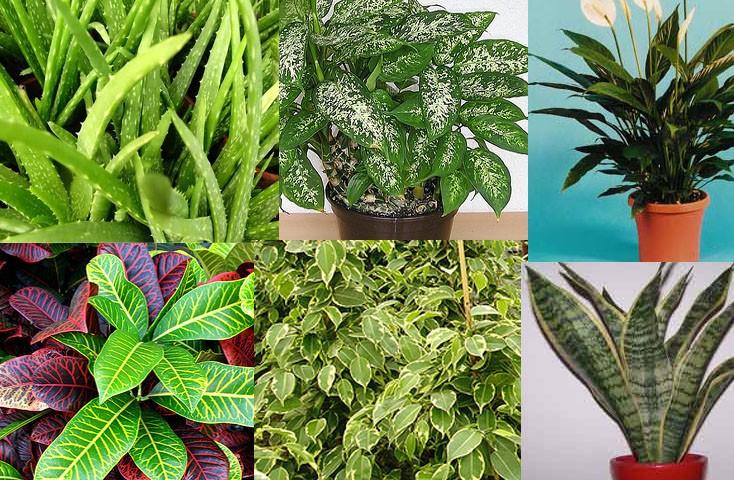 Approfondimenti e curiosit sulle piante - Piante antismog ...