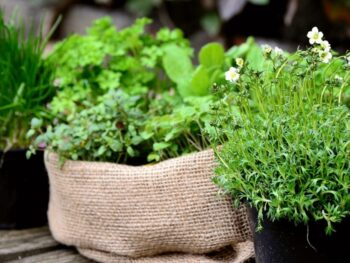 piante-aromatiche-cucina