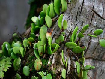 piante epifite