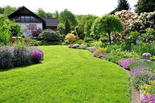 piante estate