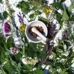 Le piante curative