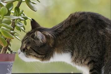 piante tossiche gatti