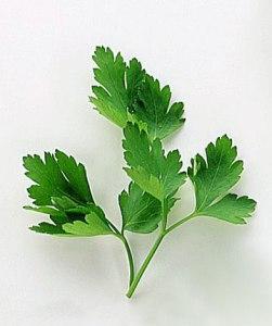 prezzemolo foglie dentellate