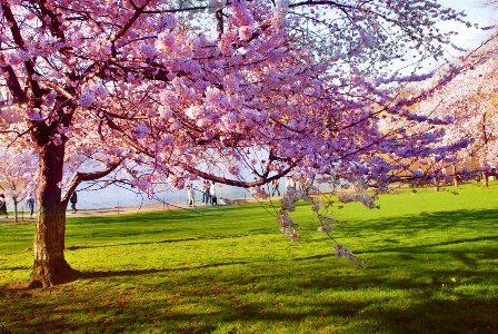cura piante primavera