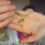 piccole radici pothos