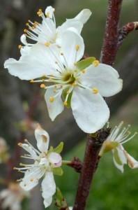 fiori piccoli bianchi