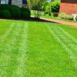 tagliare bordi del giardino