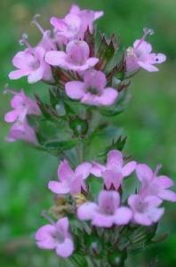 fiori molto piccoli