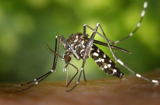 rimedi zanzara